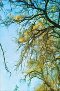 Yellow Photos - Oak Cathedral No 3 by Douglas MooreZart
