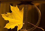 Grill Gate Photos - Oak Leaf in Wrought Iron by Linda Hines