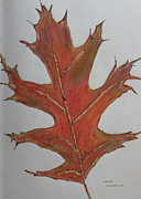 Oak Drawings Prints - Oak Leaf Print by Patricia Januszkiewicz