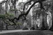 Brick Building Prints - Oak Limb at Old Sheldon Church Print by Scott Hansen