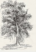 Drawn Prints - Oak Tree Print by Elise Palmigiani