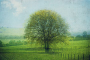 Oak Tree In Spring Print by Dirk Wuestenhagen