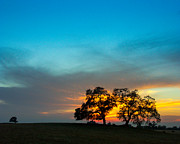 A Summer Evening Prints - Oaks and Sunset 2 Print by Terry Garvin