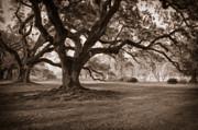 Kathleen K Parker - Oaks of Oak Alley Plantation - Digital Art