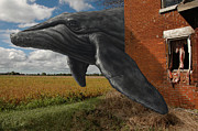Humpback Metal Prints - Obtain Bearing Metal Print by Mark Zelmer