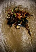 Botanical Beach Photos - Ocean Bouquet 3 by Wenata Babkowski