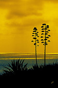 Ocean And Beach Acrylic Prints - Ocean Sunset With Agave Silhouette by Ben and Raisa Gertsberg