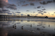 Ocean Birds Prints - Oceanside Pier Birds Print by Peter Tellone