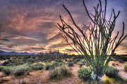 Sunset Prints Photo Posters - Ocotillo Sunset Poster by Anthony Citro