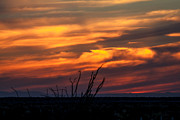 Ocotillo Sunset Print by Robert Bales