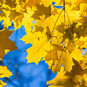 October Blues 8 - Square Print by Alexander Senin