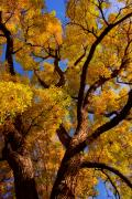 Cottonwood Photos - October by James Bo Insogna