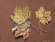 Gina Gahagan Metal Prints - October Leaves Metal Print by Gina Gahagan