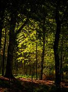 Odd Jeppesen - October Light