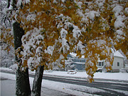 Fall Leaves Photos - October Snow by Ken Branch