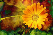 Autumn Photographs Digital Art Prints - October Zinnia Print by Ellen Cotton