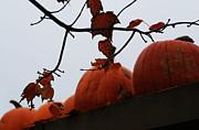 Linda Knorr Shafer - October