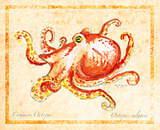 Octopus Mixed Media Framed Prints - Octopus For Study Framed Print by William Depaula