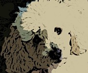 Dog Photographs Prints - Oddles of  Poodle Print by John Malone