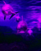 Dolphins Digital Art - Odyssey v1 by Wingsdomain Art and Photography