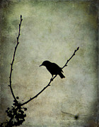 Tree Creature Framed Prints - Oh Black Bird Framed Print by Darren Fisher