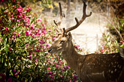 Beautiful Animal Posters - Oh Deer oh deer Poster by Erik Brede