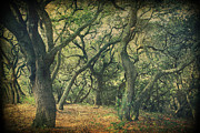 Tree Trunks Metal Prints - Oh How They Danced Metal Print by Laurie Search