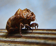 Cicada Photos - Oh Shell No by Jeffrey Platt