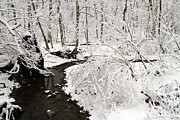 David Yunker Prints - Ohio Snow Dusted Creek Print by David Yunker