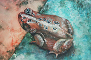 Donna Pierce-Clark - Ohio Toad