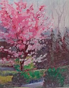 Judy Fisher Walton - Okame Cherry Tree