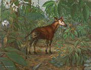 ACE Coinage painting by Michael Rothman - Okapi