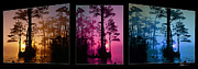 Cypress Trees Digital Art Posters - Okefenokee SwampTriptych-featured in Nature Wildlife-Nature Photography-and Cards for all Occasions Poster by EricaMaxine  Price