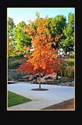 Oklahoma Fall Print by Randi Grace Nilsberg