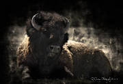 Bison Digital Art - Old and Wise by Ryan Courson