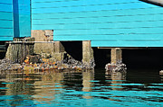 Boat Shed Prints - Old Aqua Boat Shed with Aqua Reflections Print by Kaye Menner