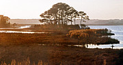 Va Prints - Old Assateague Island Print by Skip Willits