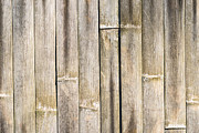 Old Bamboo Fence Print by Alexander Senin