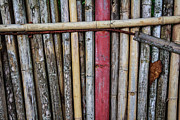 Bamboo Fence Prints - Old Bamboo Fence Print by Niphon Chanthana