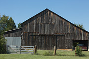 Farming Barns Posters - Old Barn and Truck Poster by Kay Pickens