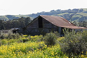 Old Country Roads Prints - Old Barn in Sonoma California 5D22232 Print by Wingsdomain Art and Photography