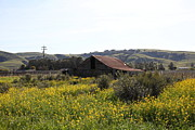 Old Country Roads Prints - Old Barn in Sonoma California 5D22234 Print by Wingsdomain Art and Photography