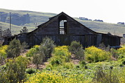 Old Country Roads Framed Prints - Old Barn in Sonoma California 5D22236 Framed Print by Wingsdomain Art and Photography