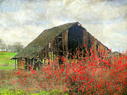 Irina Hays - Old Barn in Spring