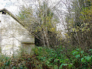 Barn In The Woods Photos - Old Barn in the Trees by Pamela Patch