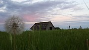 Anne Peters - Old barn with pinkish sky
