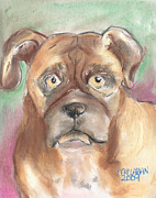 Boxer Pastels Framed Prints - Old Boxer Framed Print by Christine Callahan