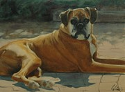 Boxer Painting Prints - Old Boxer Print by Robin Wellner