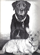 Dogs Drawings - Old Buddies by James Oliver