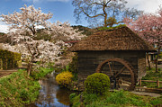 Cherry Blossom Trees Prints - Old Cherry Blossom Water Mill Print by Sebastian Musial